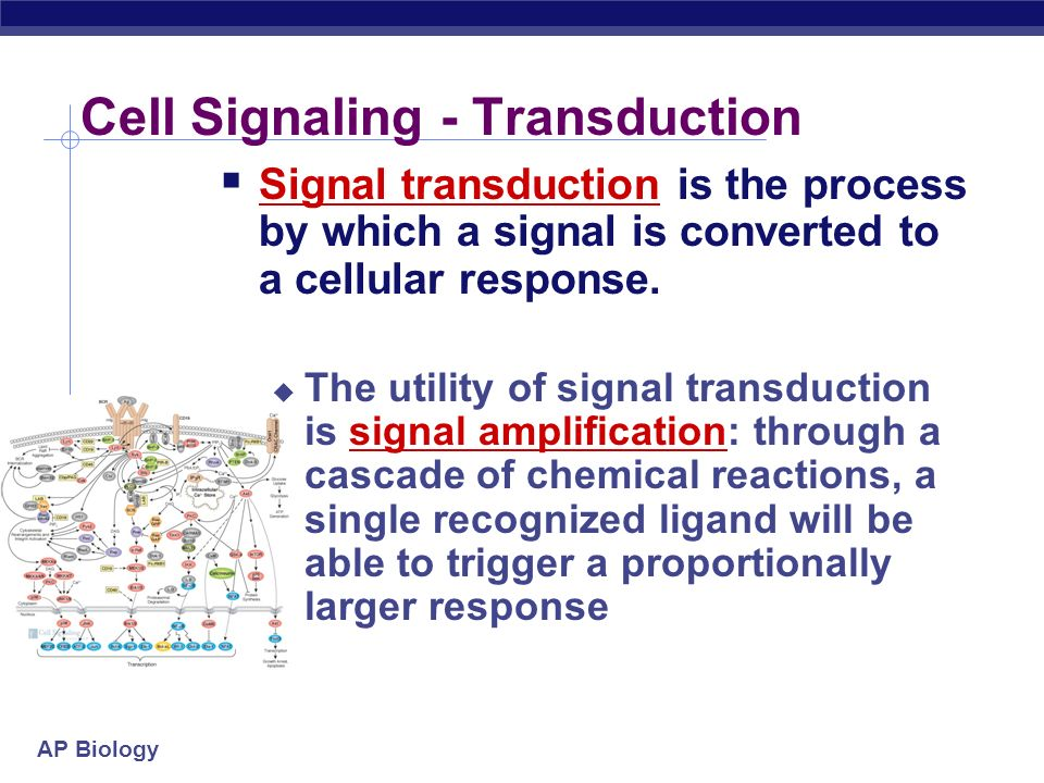Cell Signaling - Transduction