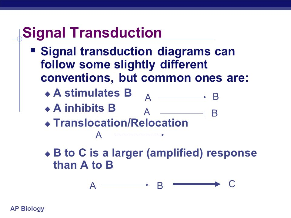 Signal Transduction Signal transduction diagrams can follow some slightly different conventions, but common ones are: