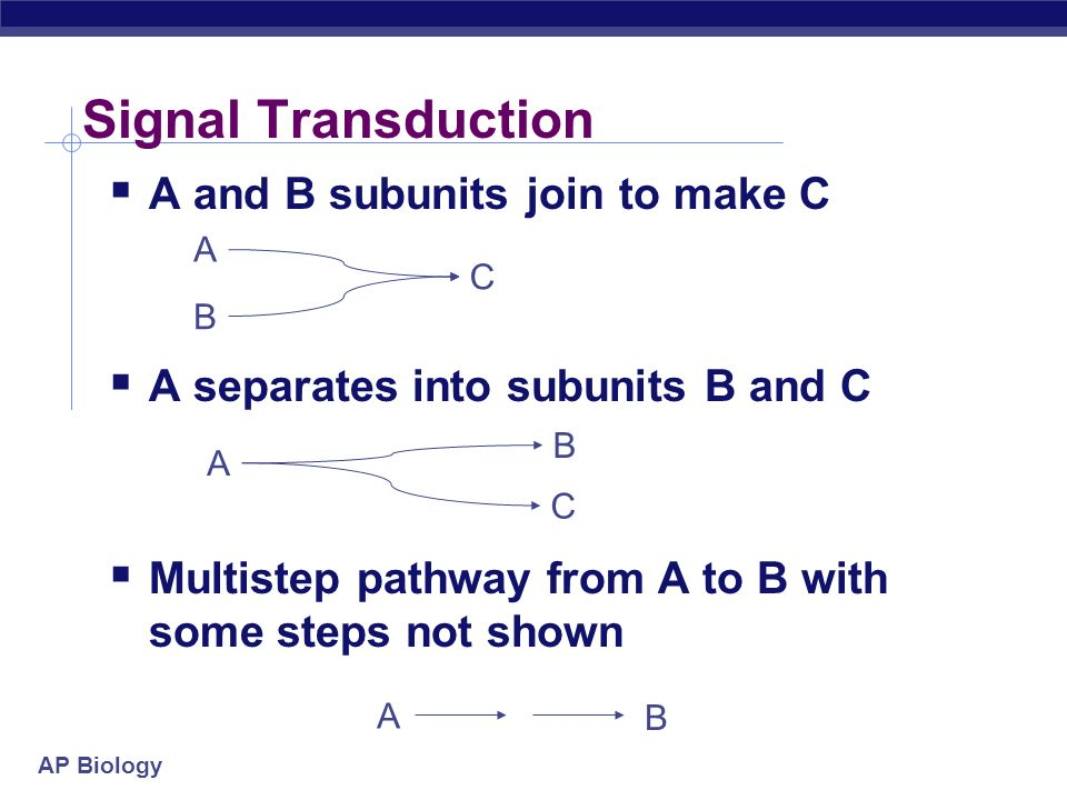 Signal Transduction A and B subunits join to make C