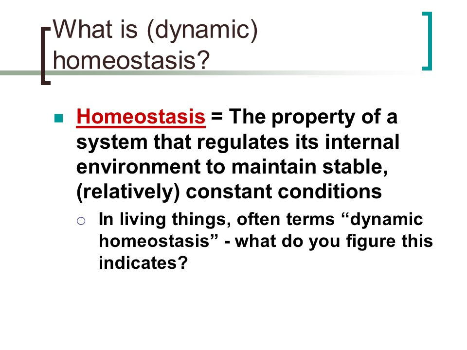 What is (dynamic) homeostasis