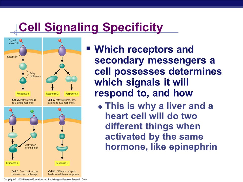 Cell Signaling Specificity