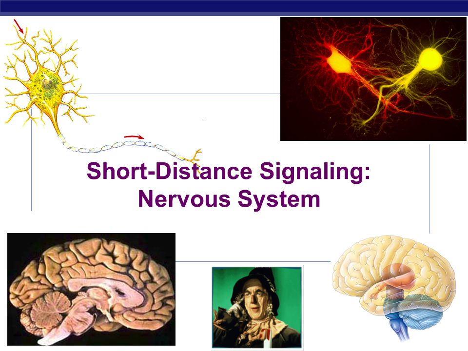 Short-Distance Signaling: Nervous System