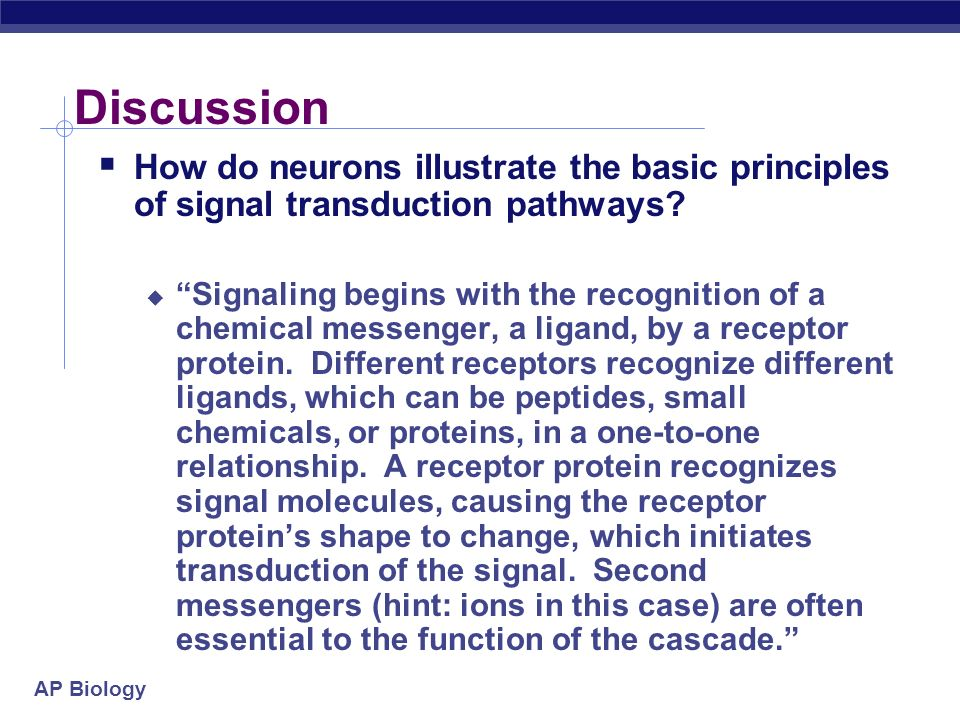 Discussion How do neurons illustrate the basic principles of signal transduction pathways