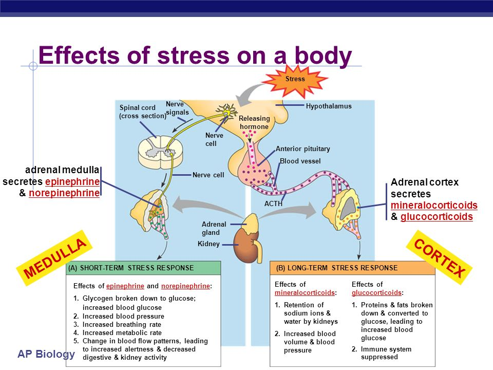 Effects of stress on a body