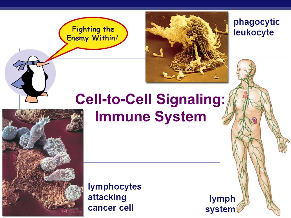 Fighting the Enemy Within! Cell-to-Cell Signaling: