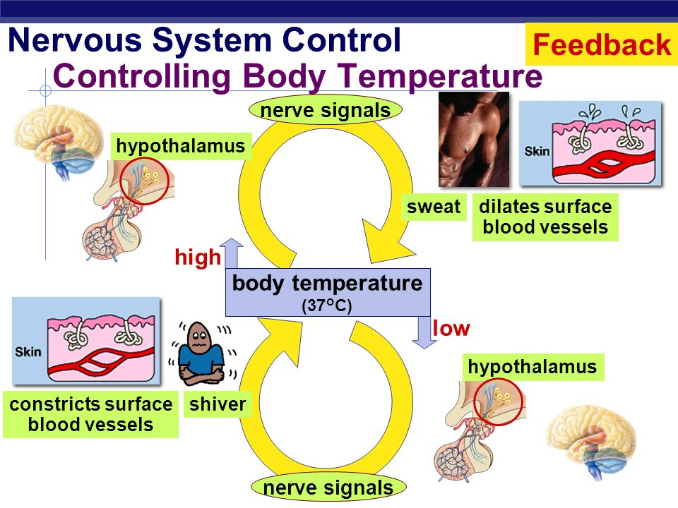 Controlling Body Temperature