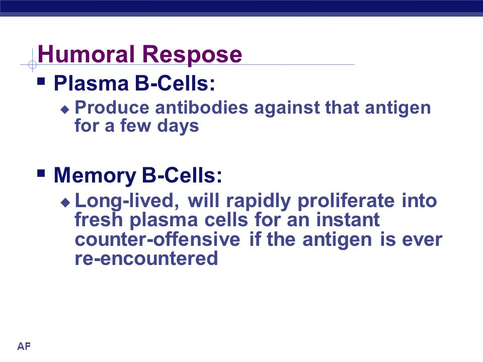 Humoral Respose Plasma B-Cells: Memory B-Cells: