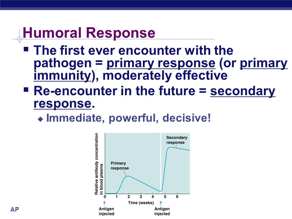 Humoral Response The first ever encounter with the pathogen = primary response (or primary immunity), moderately effective.