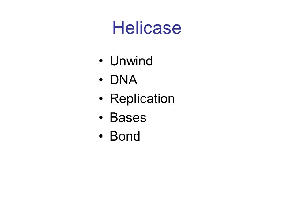 Helicase Unwind DNA Replication Bases Bond
