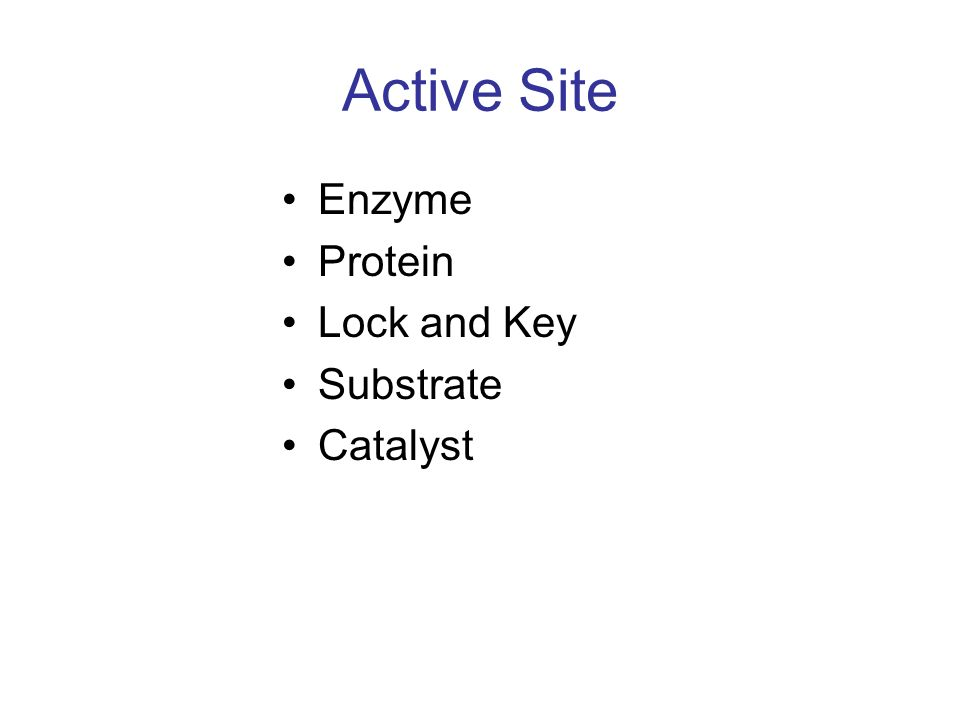 Active Site Enzyme Protein Lock and Key Substrate Catalyst