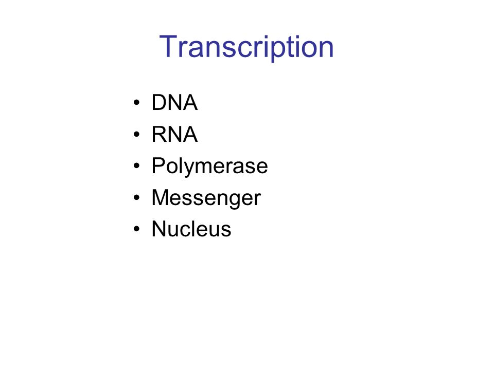 Transcription DNA RNA Polymerase Messenger Nucleus