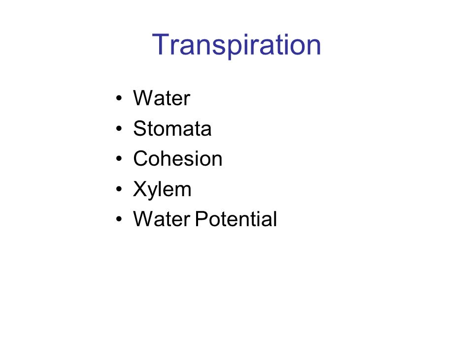 Transpiration Water Stomata Cohesion Xylem Water Potential