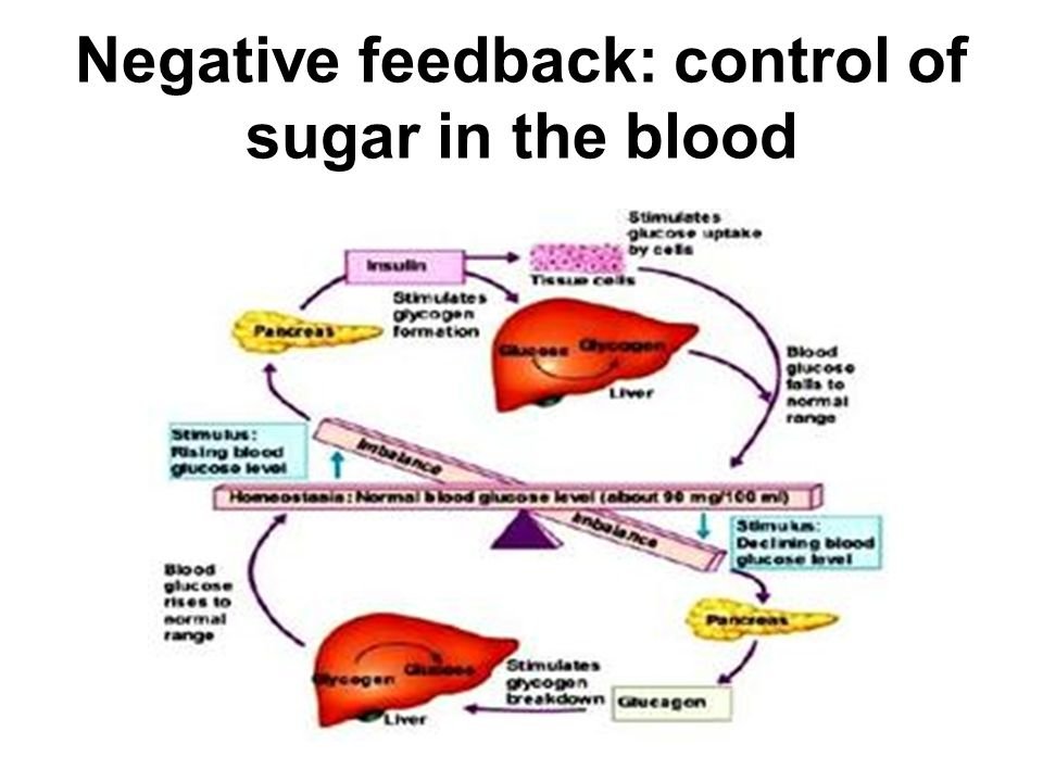 Negative feedback: control of sugar in the blood