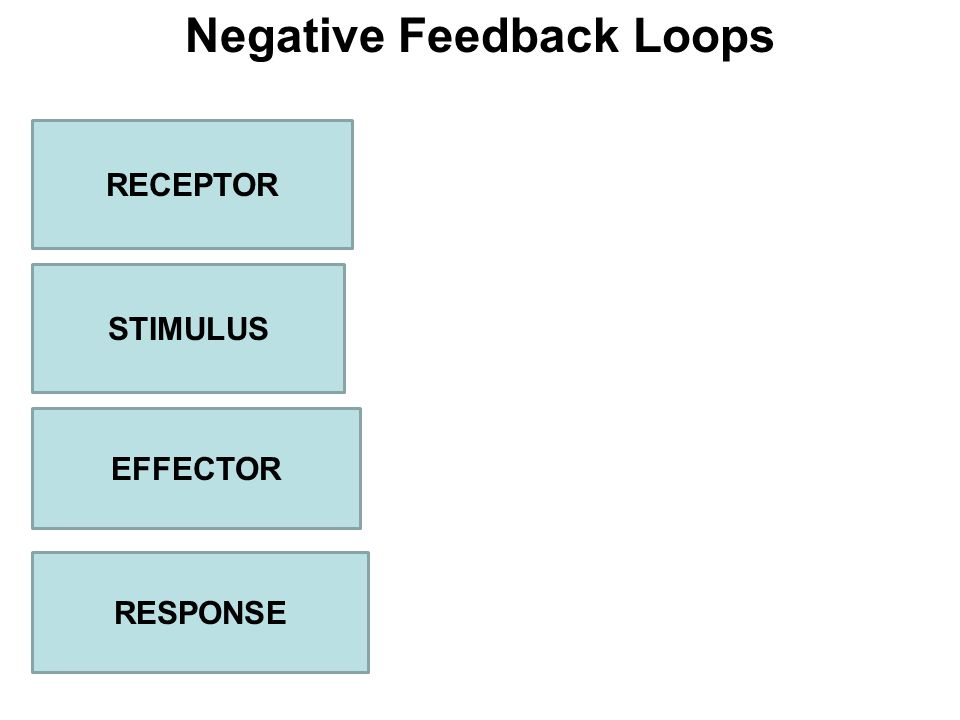 Negative Feedback Loops