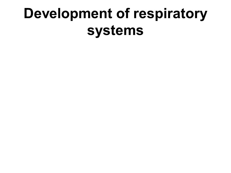 Development of respiratory systems