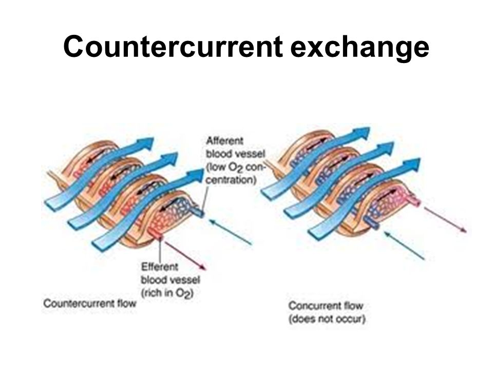 Countercurrent exchange