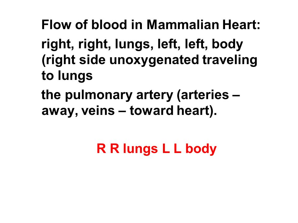 Flow of blood in Mammalian Heart: