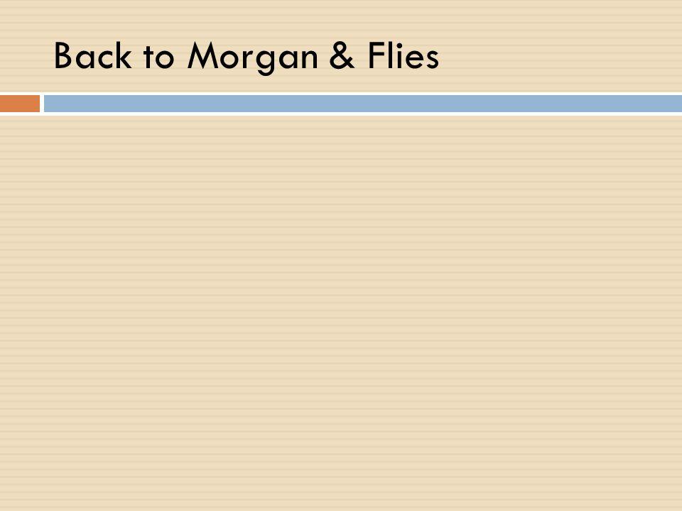 Back to Morgan & Flies