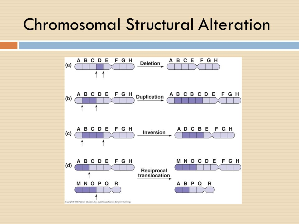 Chromosomal Structural Alteration