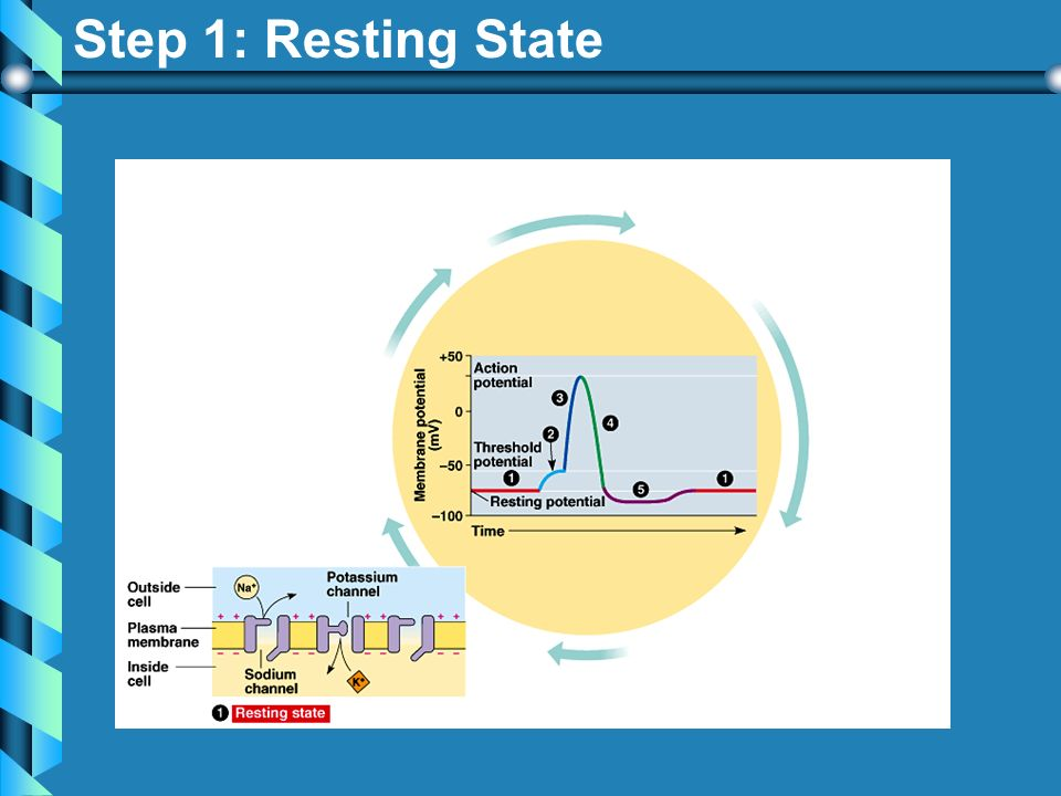 Step 1: Resting State