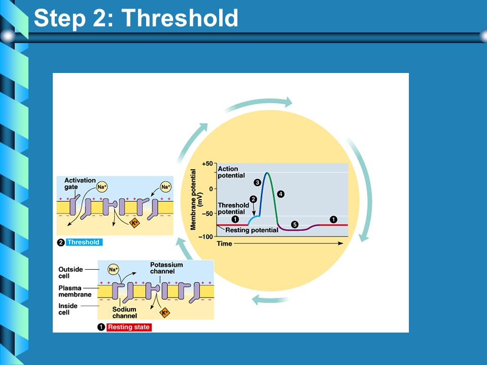 Step 2: Threshold