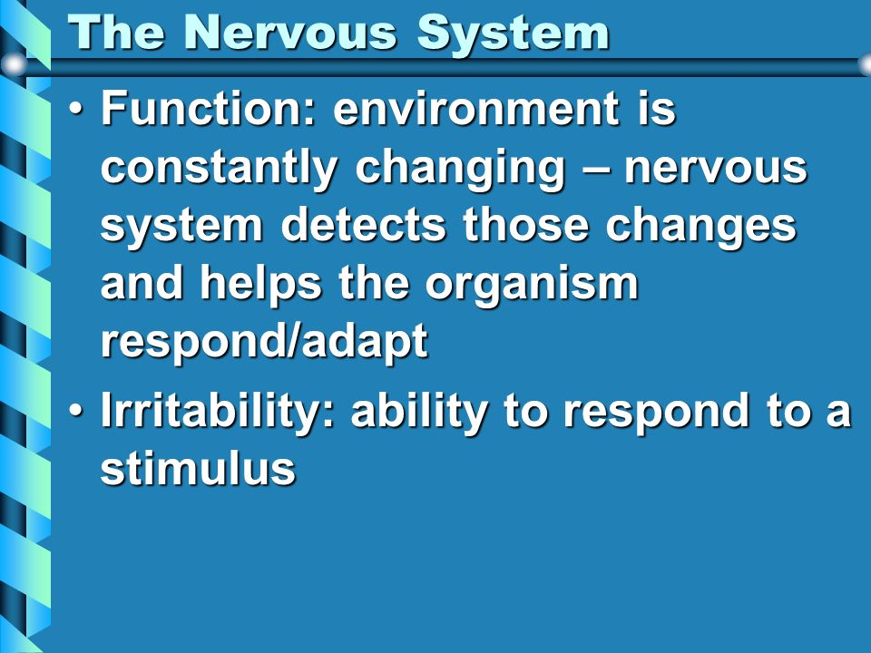 The Nervous System Function: environment is constantly changing – nervous system detects those changes and helps the organism respond/adapt.
