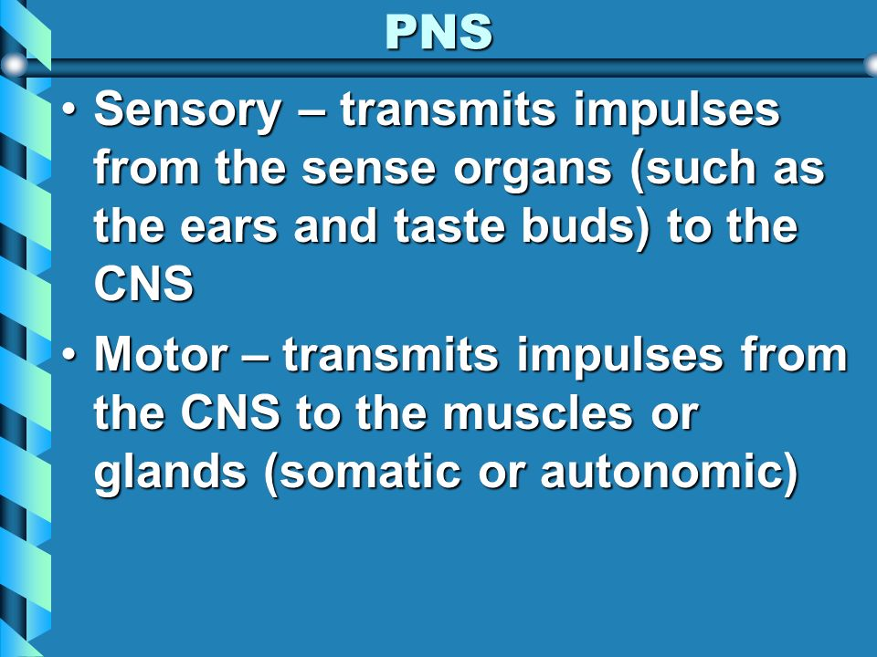 PNS Sensory – transmits impulses from the sense organs (such as the ears and taste buds) to the CNS.