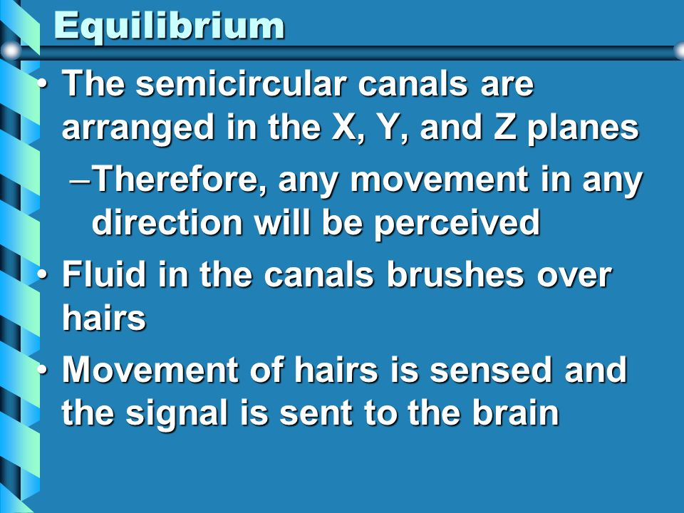 Equilibrium The semicircular canals are arranged in the X, Y, and Z planes. Therefore, any movement in any direction will be perceived.