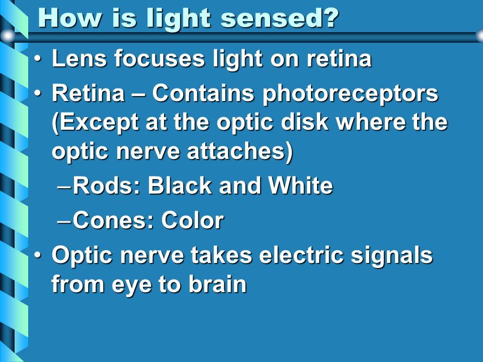 How is light sensed Lens focuses light on retina