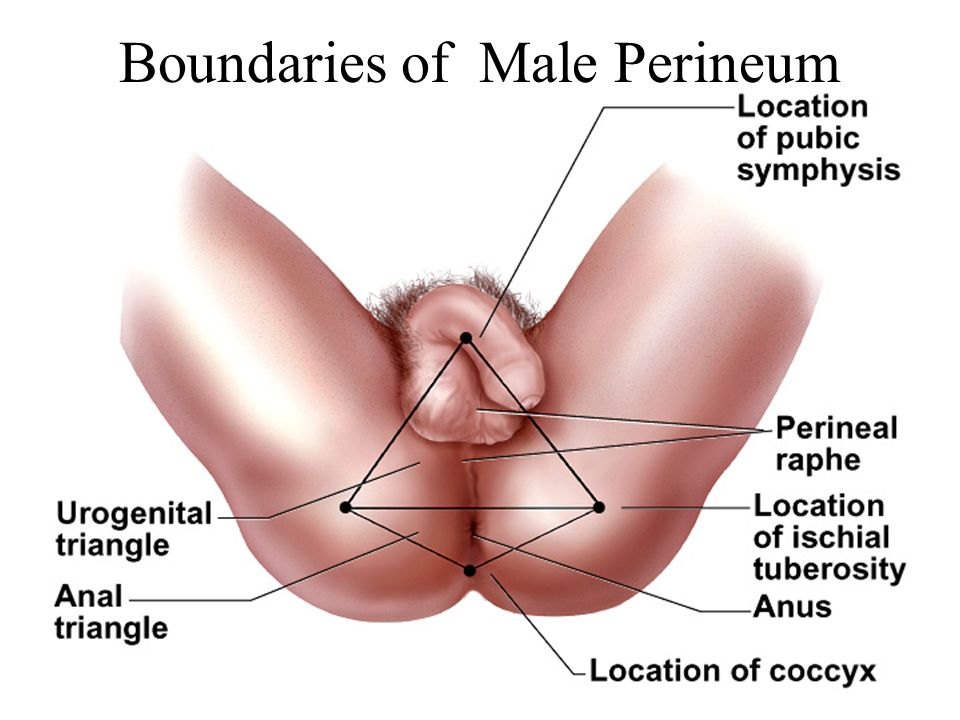 Boundaries of Male Perineum