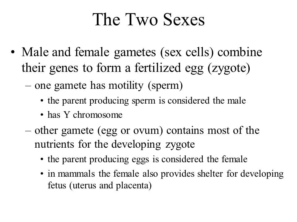 The Two Sexes Male and female gametes (sex cells) combine their genes to form a fertilized egg (zygote)