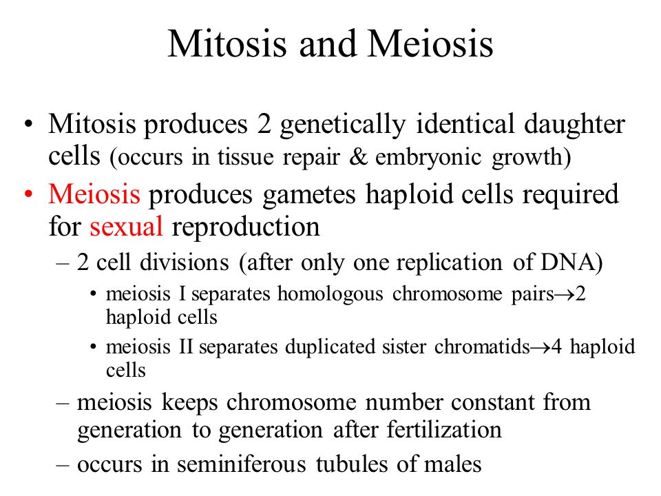 Mitosis and Meiosis Mitosis produces 2 genetically identical daughter cells (occurs in tissue repair & embryonic growth)