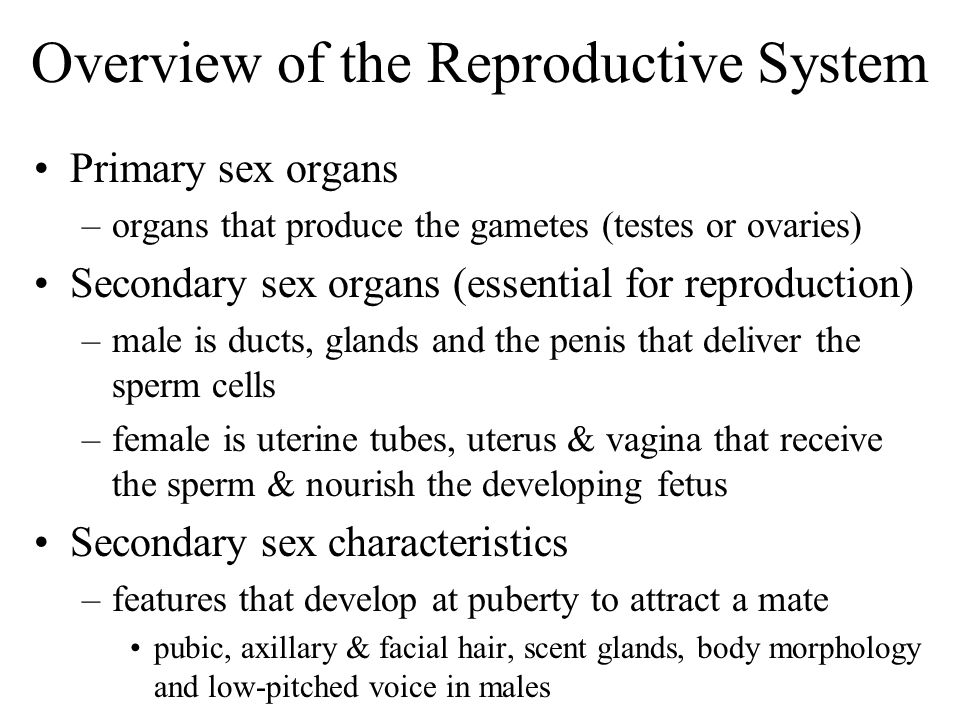 Overview of the Reproductive System