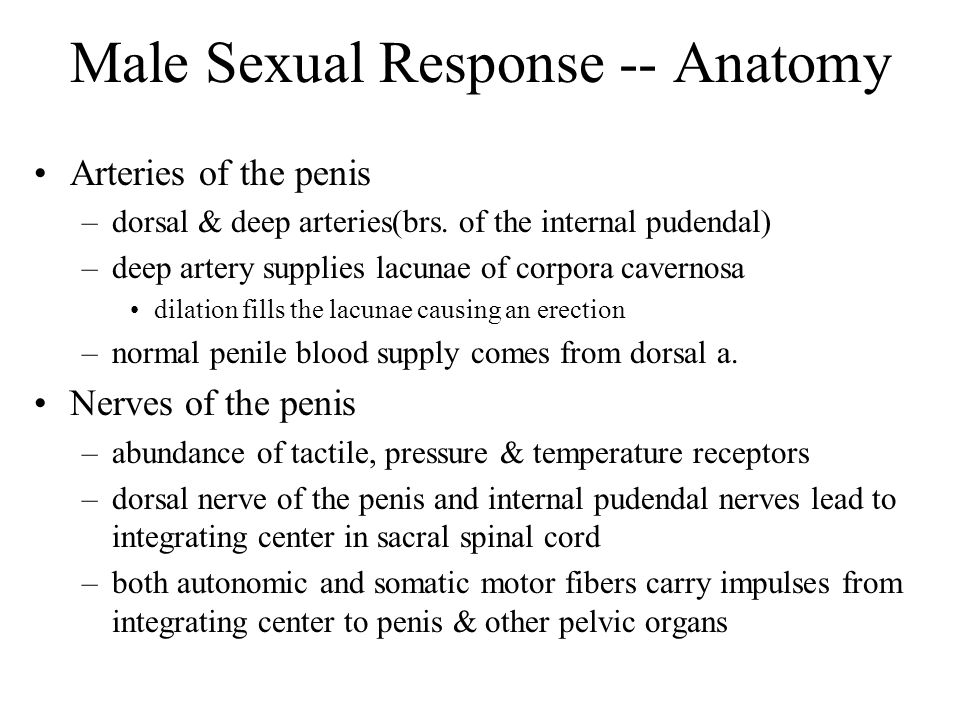 Male Sexual Response -- Anatomy