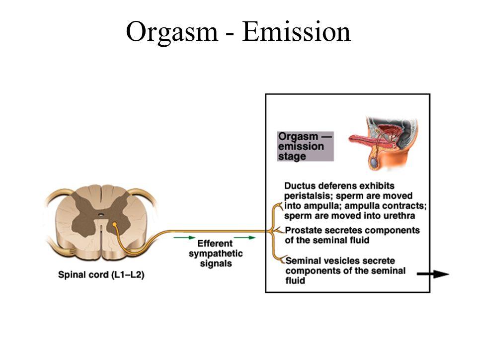 Orgasm - Emission
