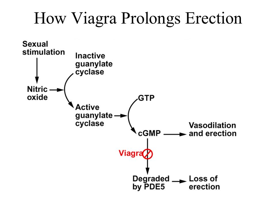How Viagra Prolongs Erection