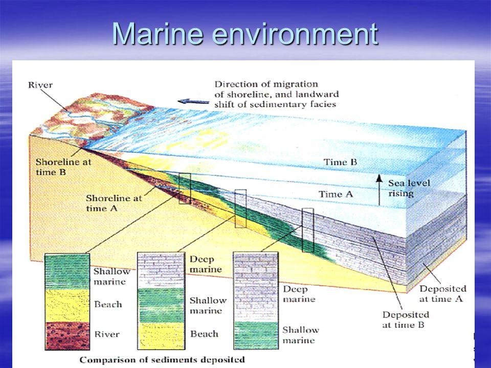 Marine environment