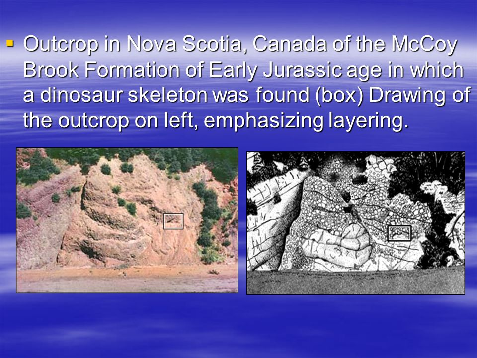 Outcrop in Nova Scotia, Canada of the McCoy Brook Formation of Early Jurassic age in which a dinosaur skeleton was found (box) Drawing of the outcrop on left, emphasizing layering.