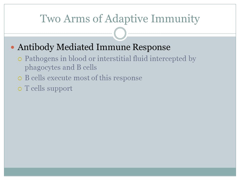 Two Arms of Adaptive Immunity