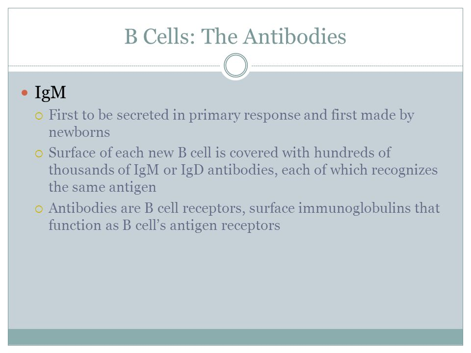 B Cells: The Antibodies