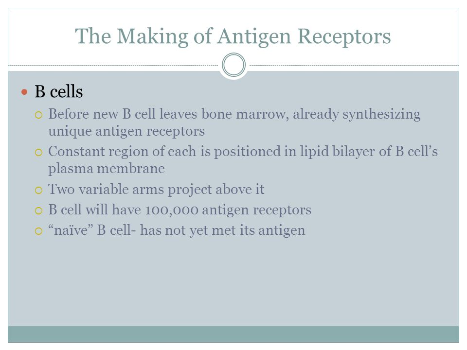 The Making of Antigen Receptors