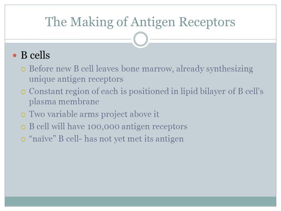 The Making of Antigen Receptors