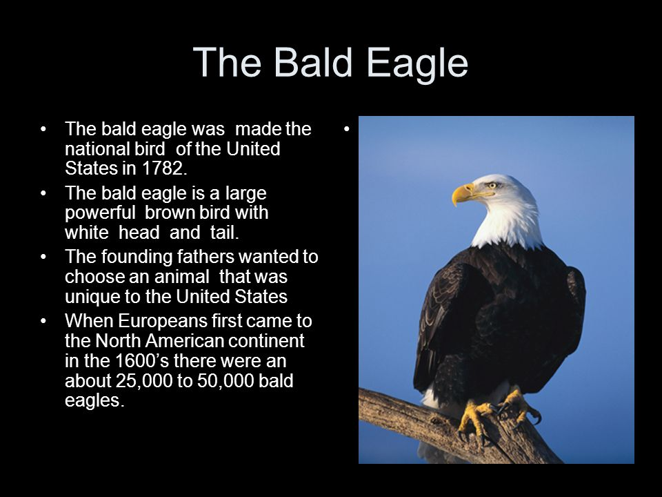 The Bald Eagle The bald eagle was made the national bird of the United States in 1782.