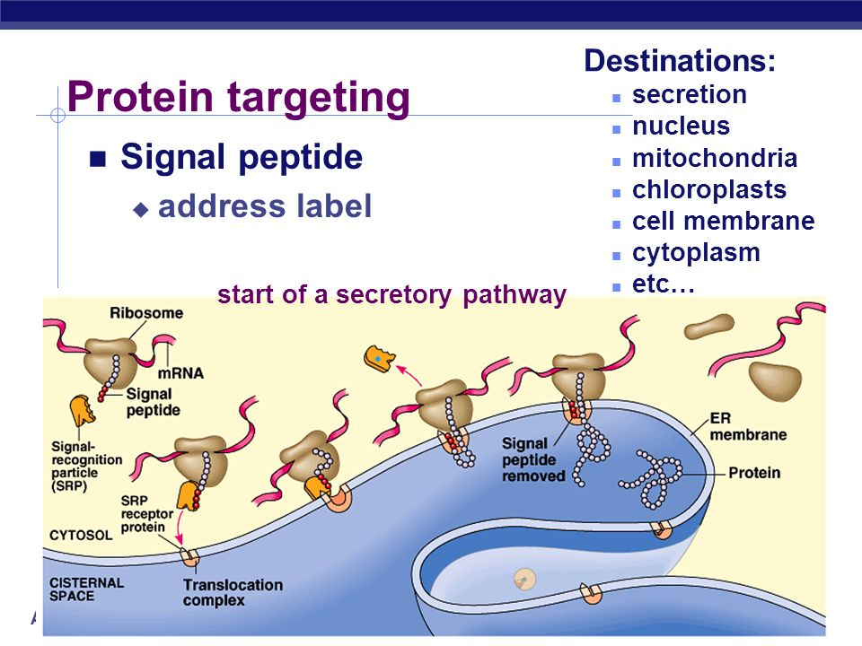 start of a secretory pathway