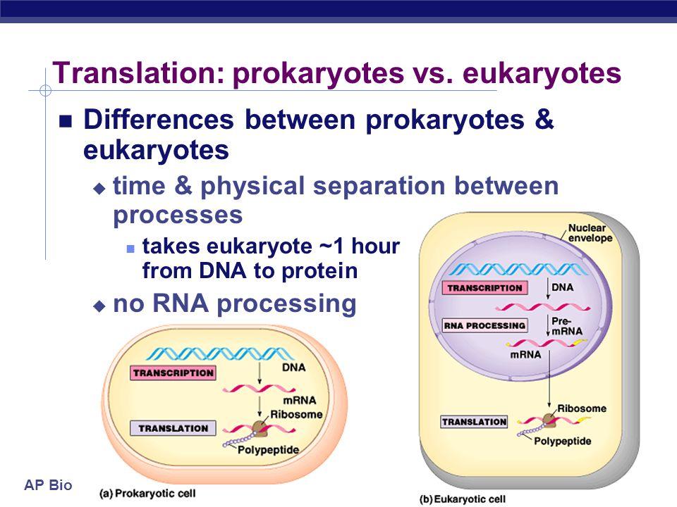 Translation: prokaryotes vs. eukaryotes