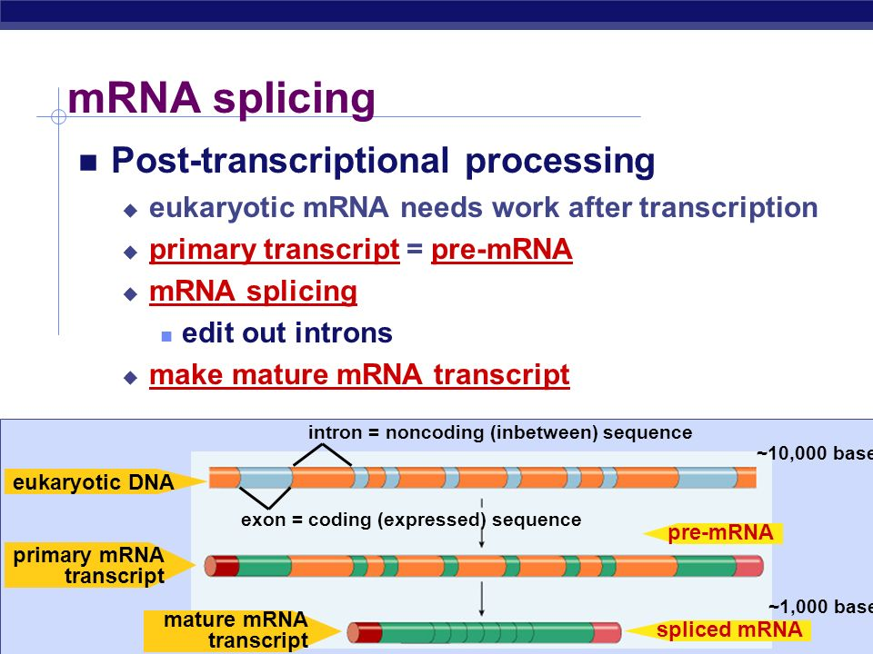 mRNA splicing Post-transcriptional processing