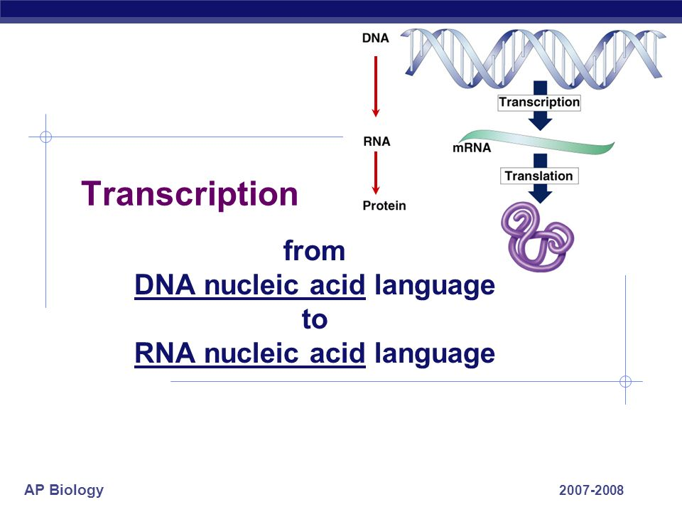 from DNA nucleic acid language to RNA nucleic acid language