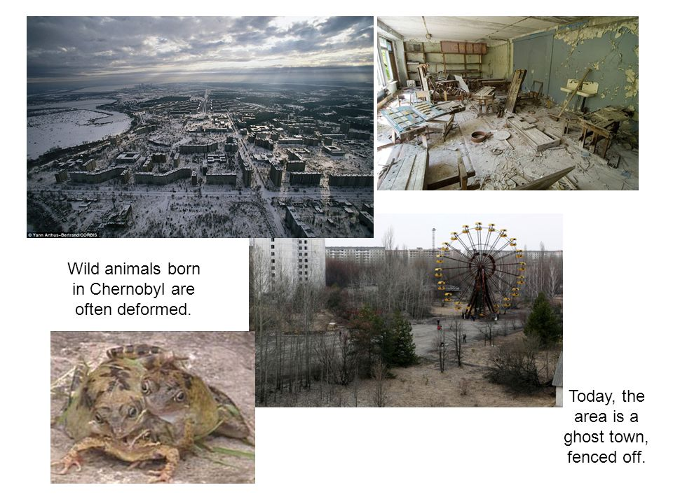 Wild animals born in Chernobyl are often deformed.