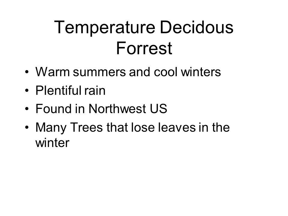 Temperature Decidous Forrest