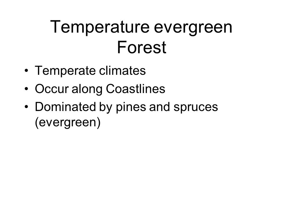 Temperature evergreen Forest